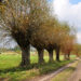 Polish landscape - country road and willows